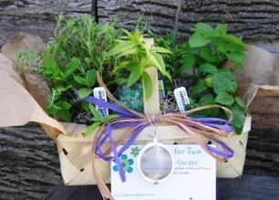 Come coltivare il proprio giardino da tisane for Creare piccolo giardino